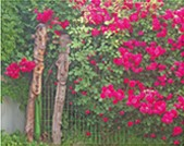 """""""Wood and Roses"""" by Tracey Raupp"""