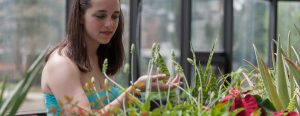 A biology student at work in the greenhouse